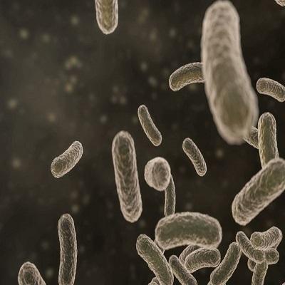 antibacterial varnish
